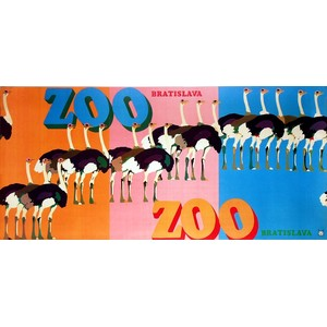 ZOO - Ostriches, Polish Poster