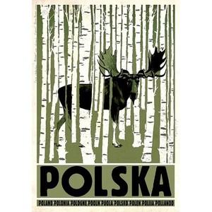 Polska, brzozy, łoś, polski...